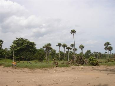 Beachfront Land - Sosua / Cabarete