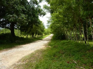 Over 24 Acre land in Country setting